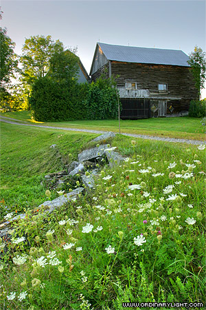 Photograph: Barn and Wildflowers