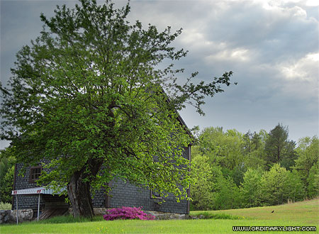 Photograph: Tree and Barn