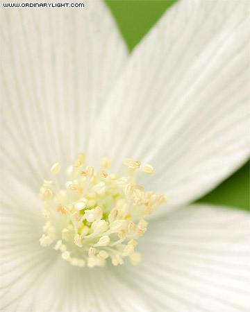 Photograph: White Flower