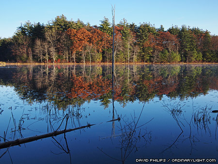 Photograph: Reflections Of Fall