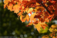 Photograph: Fall Leaves